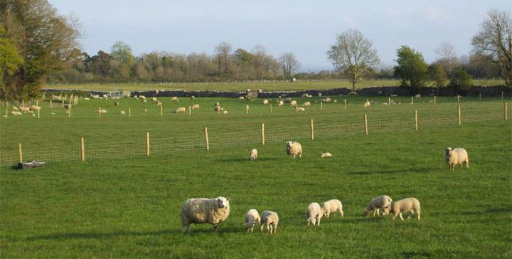 Farm Profile Teagasc Agriculture And Food Development