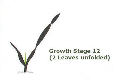 a decimal code for the growth stages of cereals pdf