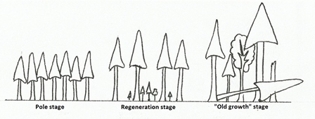 Natural forest succession phases