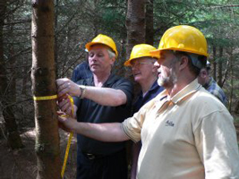 forestry_measuring