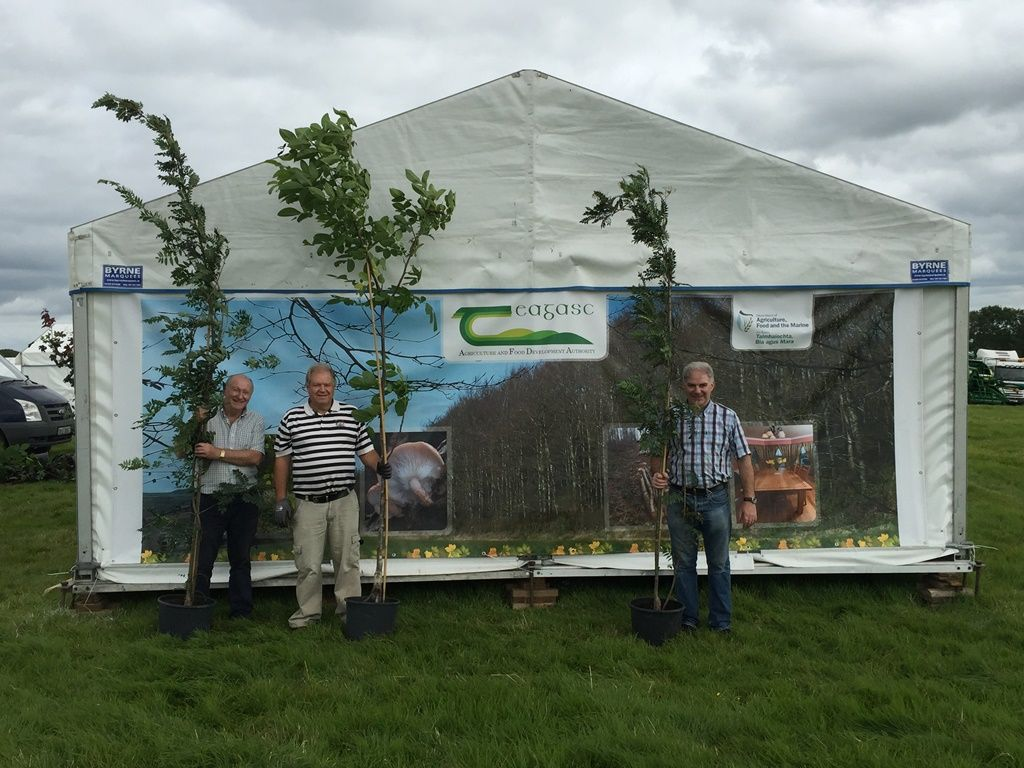 Tullamore Show 2017 - getting the trees into place...