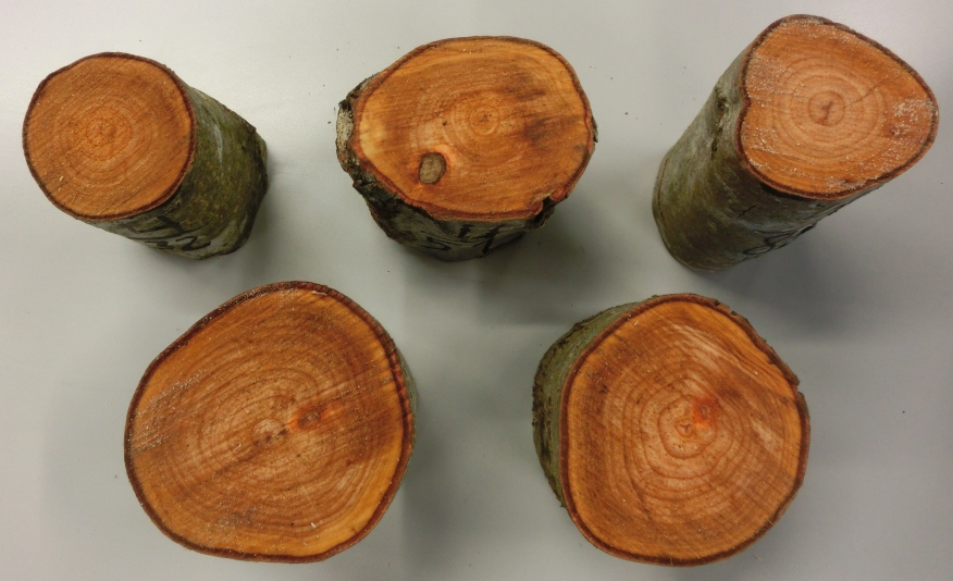 Example samples of alder second thinnings