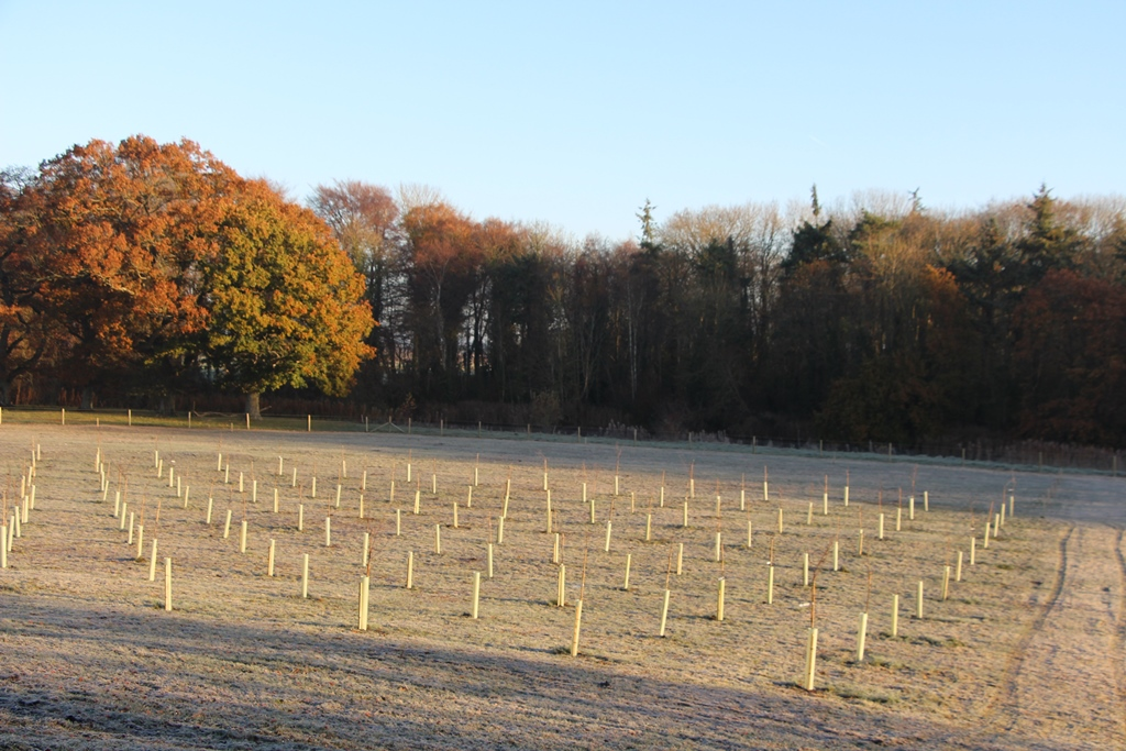 Newly planted gene bank Teagasc Oak Park