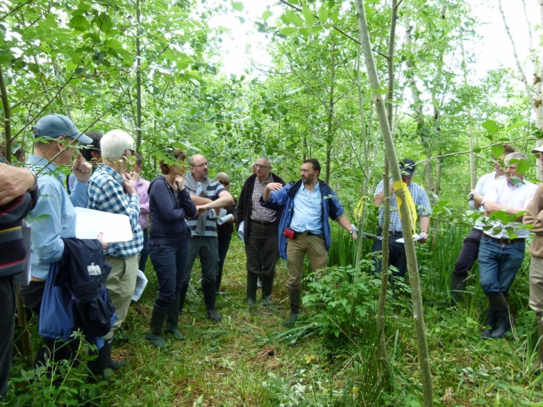 Figure 7. Dr Ian Short discussing remedial silviculture of alder underplanted into systematically-thinned poorly performing pole-stage ash 4 growing seasons after intervention. Note ash coppice regrowth has been singled.