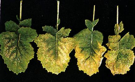 Potassium teagasc agriculture and food development for Soil zinc deficiency