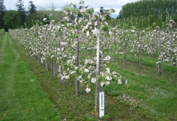 Kildalton's orchards are a great sight in May