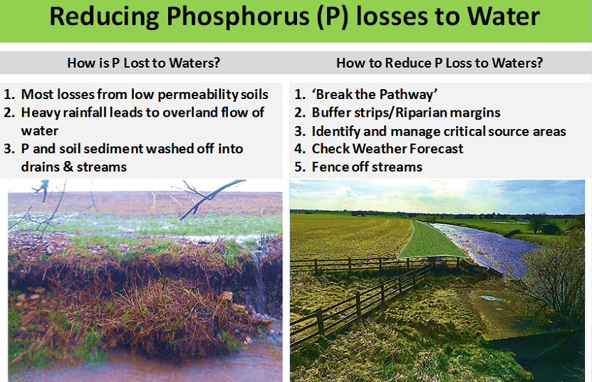 P losses to water