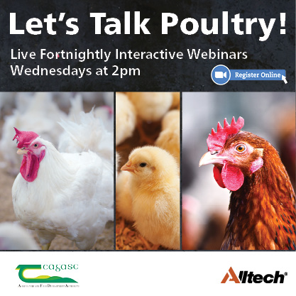Let's Talk Poultry