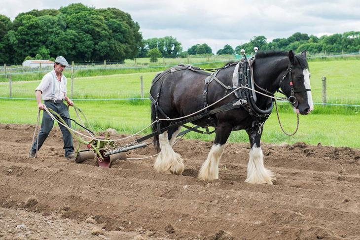 Brendan Lydon, Moycullen is pictured setting turnips at the Teagasc Farming & Country Life Event at the Teagasc Campus in Athenry, Co. Galway.