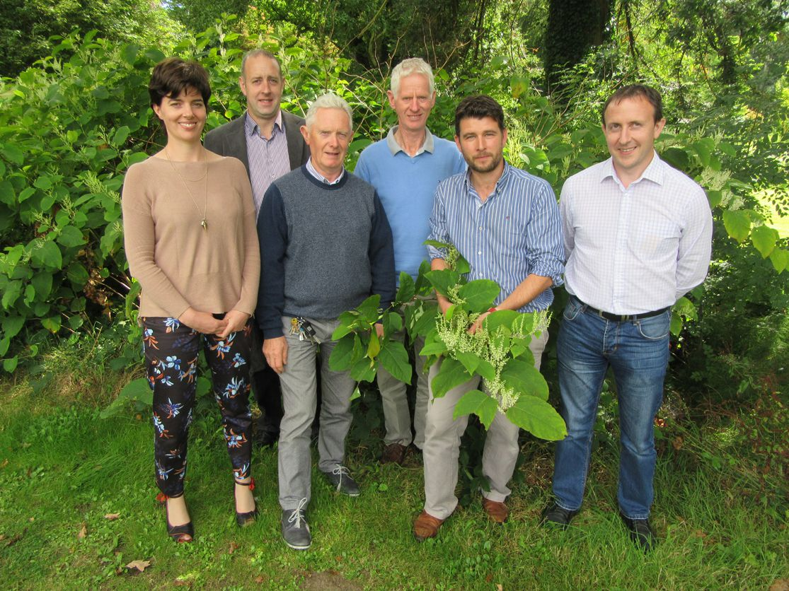 Teagasc Urges Farmers to watch out for Invasive Alien Plant Species