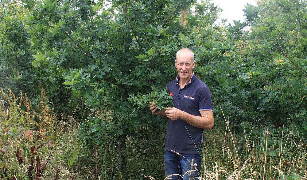 Westmeath farmer wins RDS Teagasc Farm Forestry Award