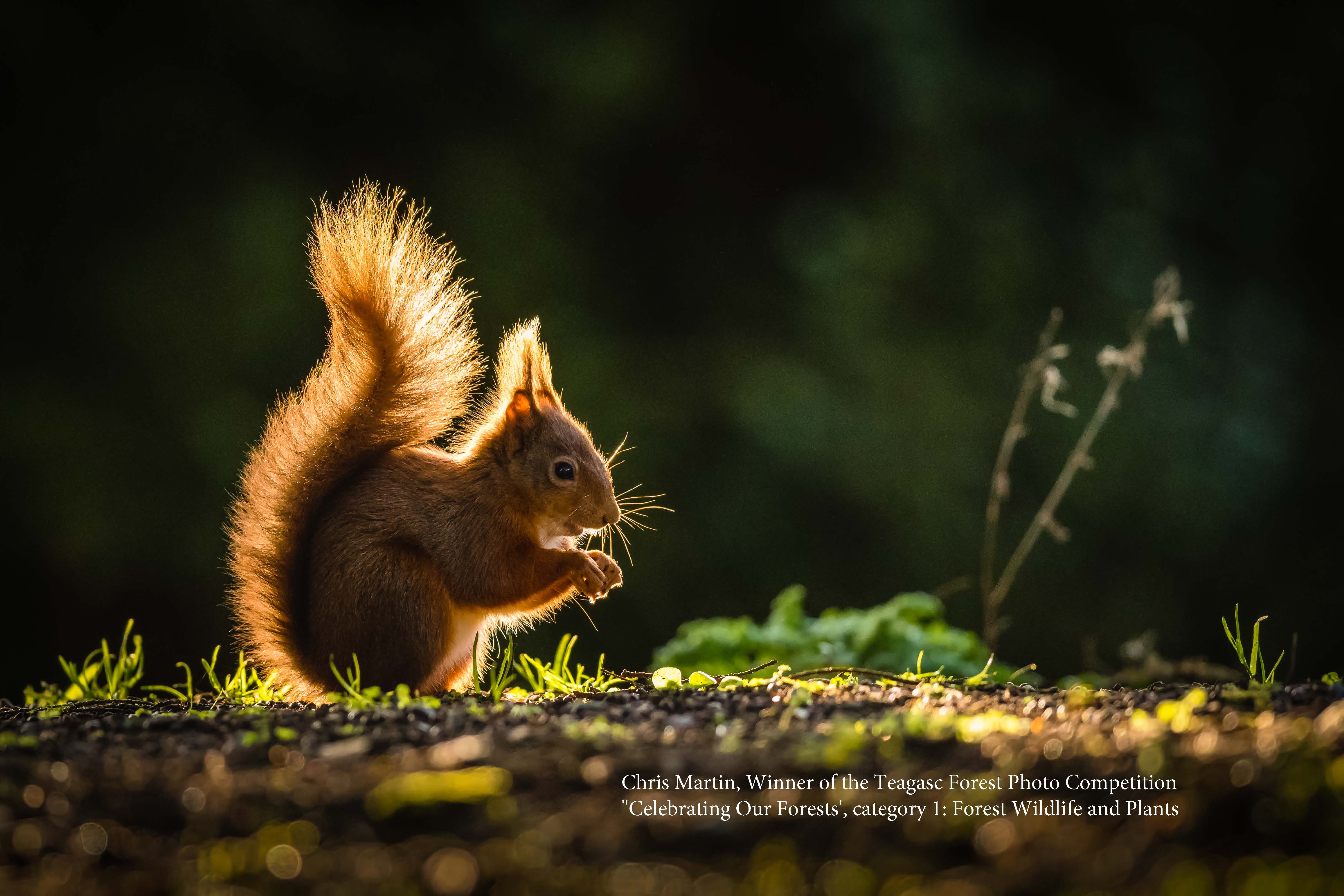 Winner of 'Forest Wildlife and Plants' Category of Teagasc Forest Photo Competition Announced
