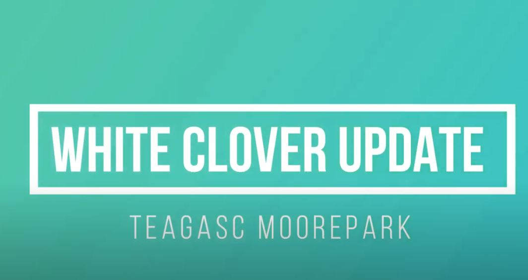 White Clover Study Update from Teagasc Moorepark - July 2020