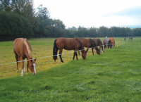 Equine Nutrition and Digestion