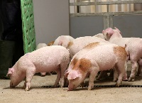 Irish Pig Market; Riding high in Dec but shot down in May