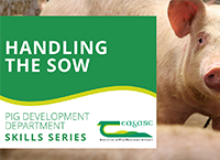 Teagasc Pig Development Department Skills Series - Moving Pigs
