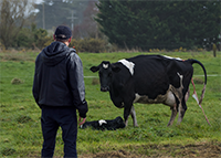 Working Safely with Livestock on Farms