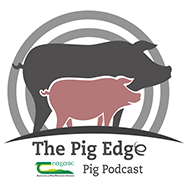 The Pig Edge Podcast
