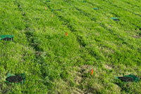 Good news for earthworm numbers in grazed pastures - the role of dung pats