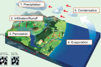The Water Cycle – where do all the water and nutrients go