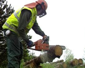 Chainsaw Operator in protective gear