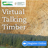 Virtual Talking Timber